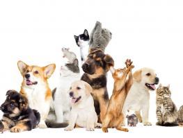 Gagnez une année de nourriture pour votre animal de compagnie