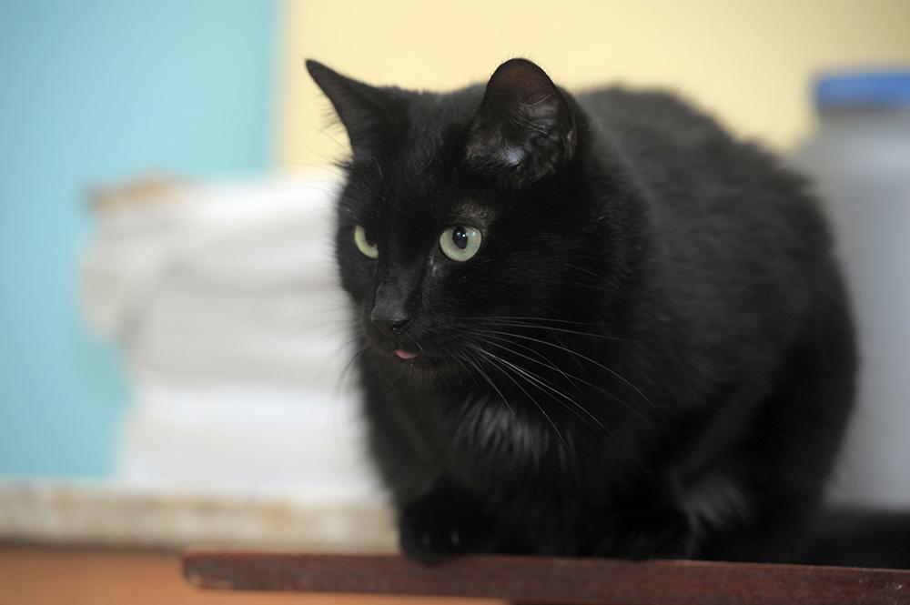 noir chatte manger noir chatte