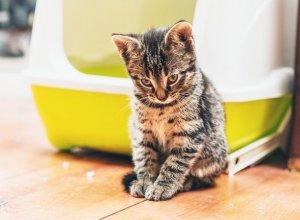 chiens chats et tous les animaux de compagnie conseils pour les chats. Black Bedroom Furniture Sets. Home Design Ideas